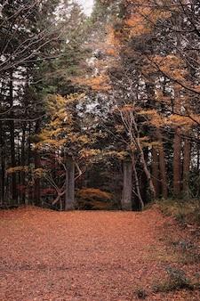 Sentier dans une forêt entourée d'arbres couverts de feuilles colorées à l'automne