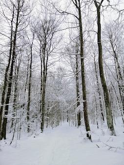 Sentier dans une forêt entourée d'arbres couverts de neige à larvik en norvège