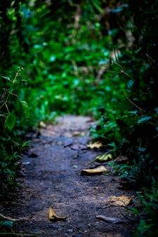 Le sentier dans la forêt tropicale