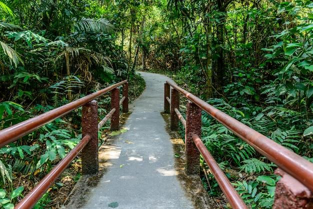 Sentier dans la forêt
