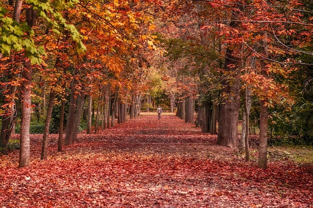 Sentier dans un parc couvert de feuilles et d'arbres séchés rouges en automne