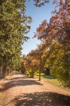 Sentier du parc d'automne sous les arbres par une journée ensoleillée