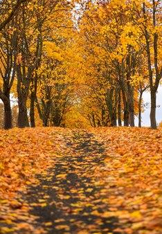 Sentier du parc de l'érable en automne, feuilles d'oranger tombées