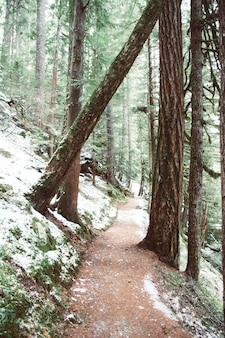 Sentier entouré d'arbres et de mousses couvertes de neige sous la lumière du soleil