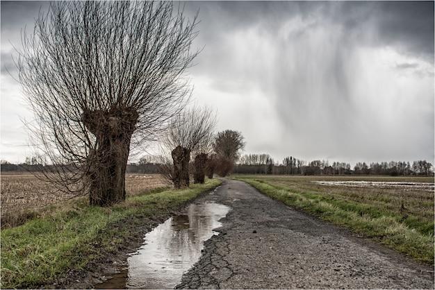 Sentier fissuré avec une flaque d'eau au milieu d'un champ vert entouré d'arbres nus