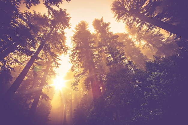 Sentier forestier brumeux