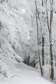 Sentier forestier parmi les arbres givrés lors d'une chute de neige