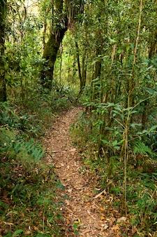 Sentier de forêt tropicale vide en amérique du sud brésil