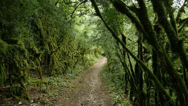 Sentier sur la forêt
