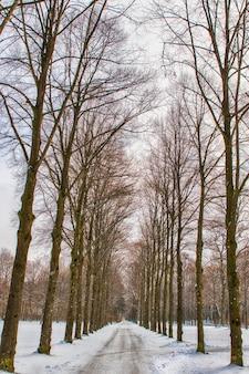 Sentier neigeux dans plusieurs arbres dans une forêt
