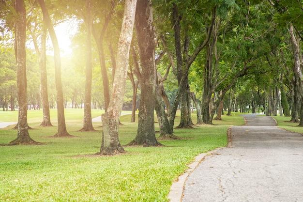 Sentier et orchidées piste pour courir dans le parc sur l'herbe verte.