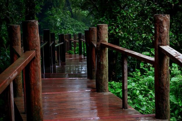 Sentier pédestre dans la forêt de montagne à feuilles persistantes chiangmai thaïlande