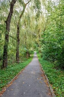 Sentier pédestre forêt tropicale arbres buissons