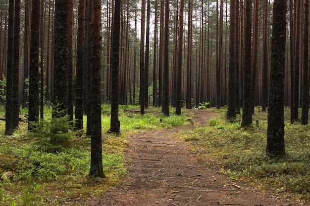 Sentier pédestre menant à la pinède.
