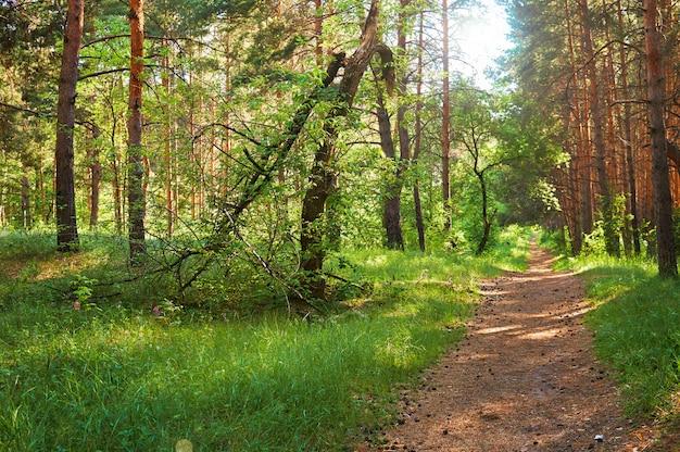 Sentier pour les gens dans la forêt verte. parc national.