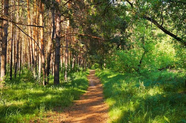 Sentier pour les gens dans la forêt verte.