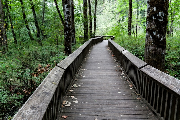 Sentier de promenade en bois entouré d'une forêt dense.