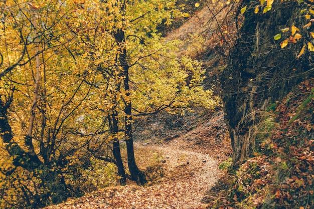 Sentier de randonnée nature coloré d'arbres et de forêts sans personne.