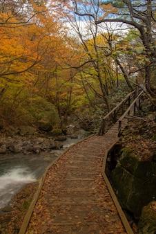 Sentier de randonnée près d'une rivière en automne