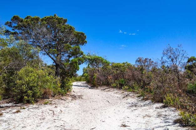 Un sentier de randonnée sablonneux à travers la forêt parc national de noosa dans le queensland, australie