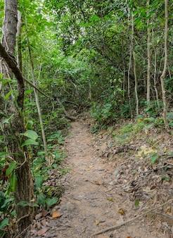 Sentier de randonnée à travers la forêt, thaïlande