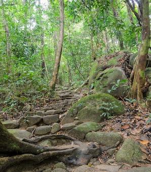 Sentier de randonnée à travers la forêt tropicale, thaïlande