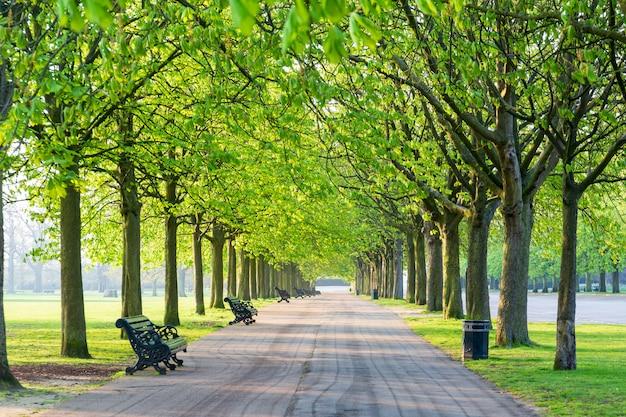 Sentier récréatif dans un parc verdoyant bordé d'arbres et de haricots.