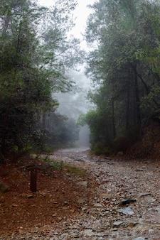 Sentier à travers la sombre forêt dans le brouillard