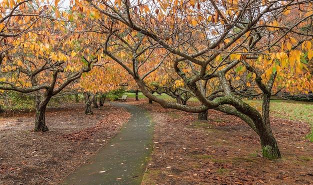 Sentier vide dans le jardin avec des cerisiers