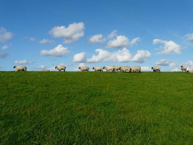 Série affluent debout ciel nuages moutons