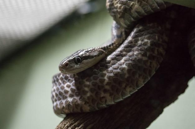 Un serpent sur un arbre pour se fondre dans la nature