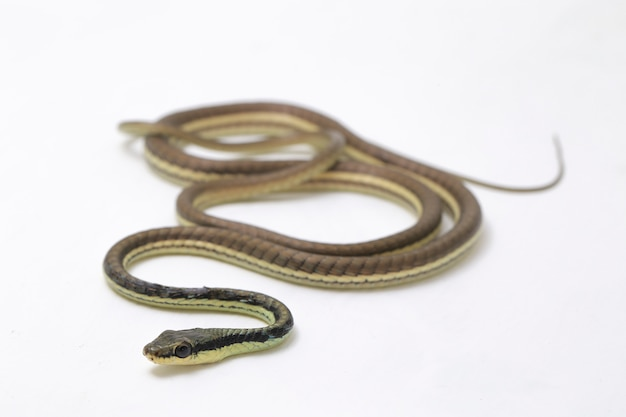 Serpent de bronze peint sur mur blanc