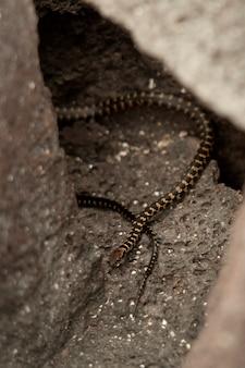 Serpent marin, punta espinoza, île fernandina, îles galapagos, équateur