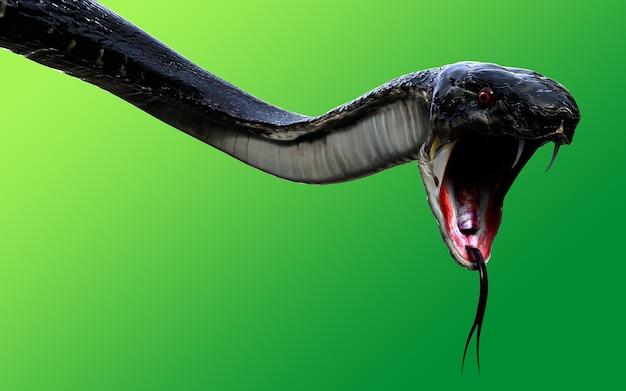 Serpent royal de cobra 3d le plus long serpent venimeux du monde