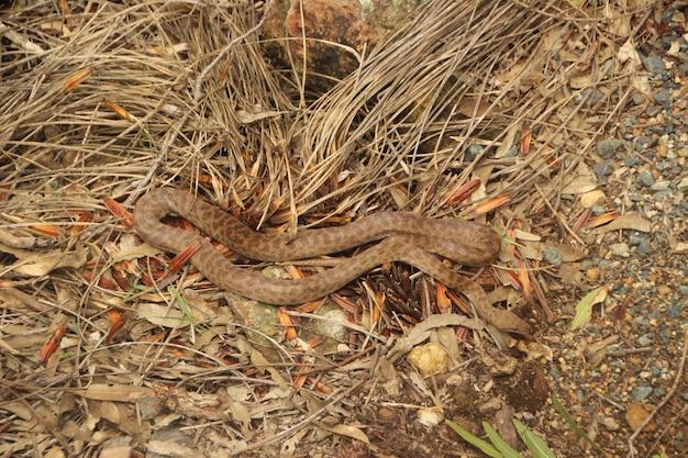 Serpent sur le sol