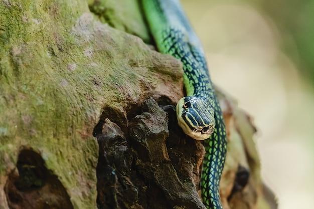 Serpent vert dans la nature