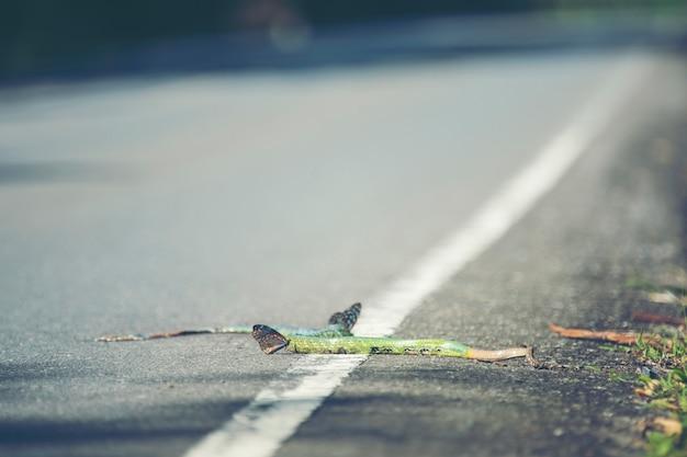 Le serpent vert mort sur la route dans le parc national de khao yai, thaïlande