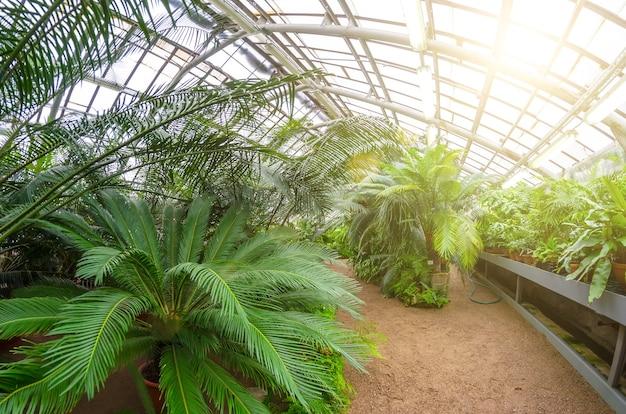 Serre avec chemin piétonnier et bosquets de palmiers.
