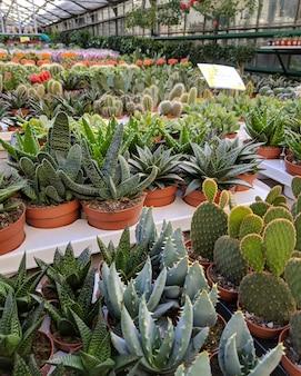 Serre avec différents cactus