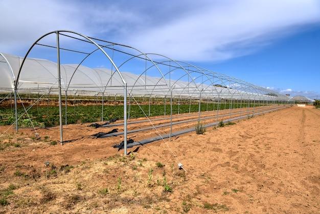 Serre moderne avec des plants de tomates
