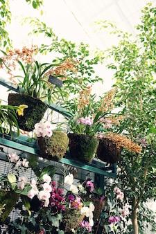Serre avec une variété de plantes