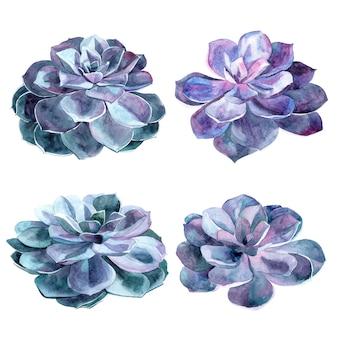 Sertie d'éléments aquarelles peints à la main pour votre conception avec des plantes succulentes