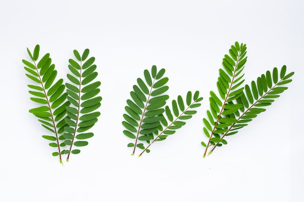 Sesbania grandiflora laisse sur une surface blanche