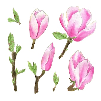 Set isolé de fleurs de magnolia aquarelle. illustrations dessinées à la main