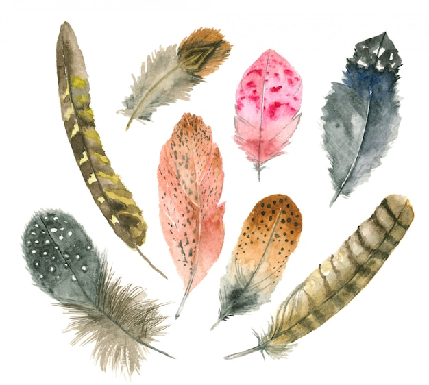 Set de plumes aquarelle