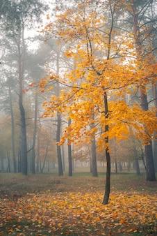 Seul arbre aux feuilles jaunes dans la forêt d'automne