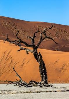 Seul arbre, belle dune et ciel bleu
