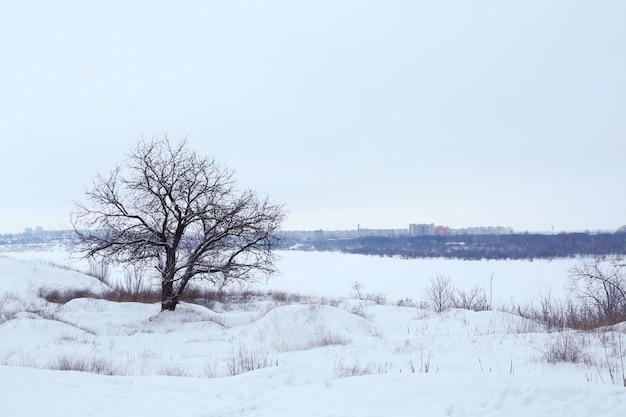 Seul arbre sur champ d'hiver