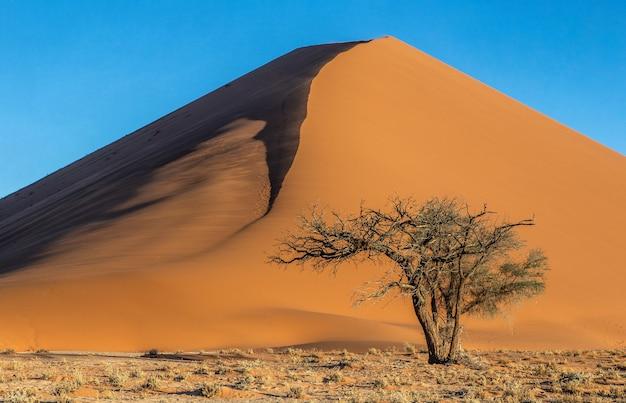 Seul arbre près d'une belle dune et ciel bleu
