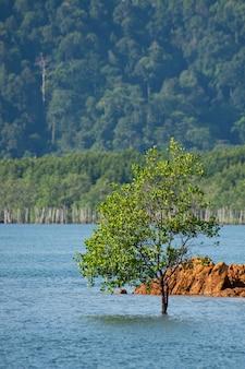 Seul arbre seul dans la mer du sud de la thaïlande